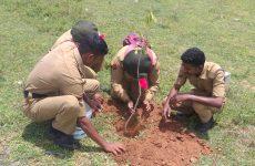 Tree plantation (3)